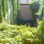 Garden Jahongir B&B Samarkand 5